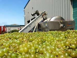 Monterey County's Arroyo Seco AVA Getting Closer on Wrapping Up An Ideal Harvest
