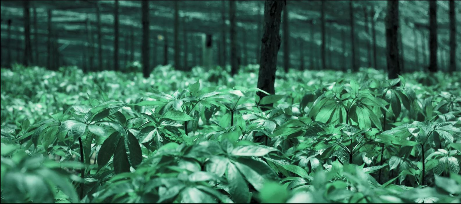 Medicinal Herbs Enhance Current Market